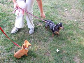 2_Doxies_1 small
