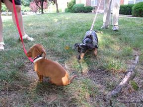 2_Doxies_2 small