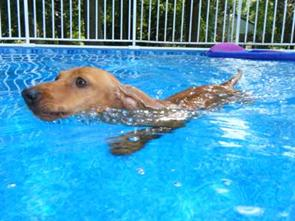 Pickles_Swimming small